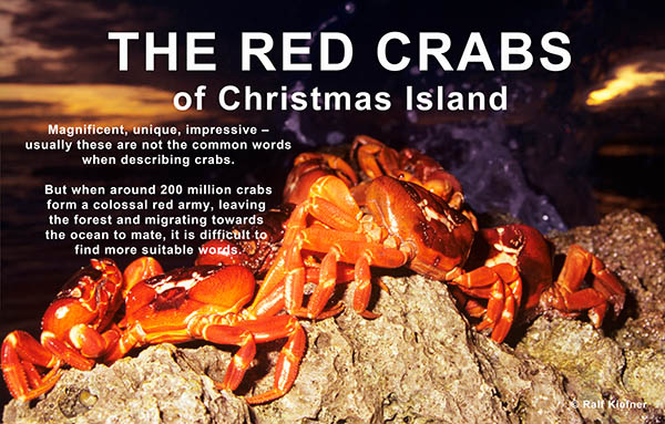 1996 - Red Crabs - Ralf Kiefner