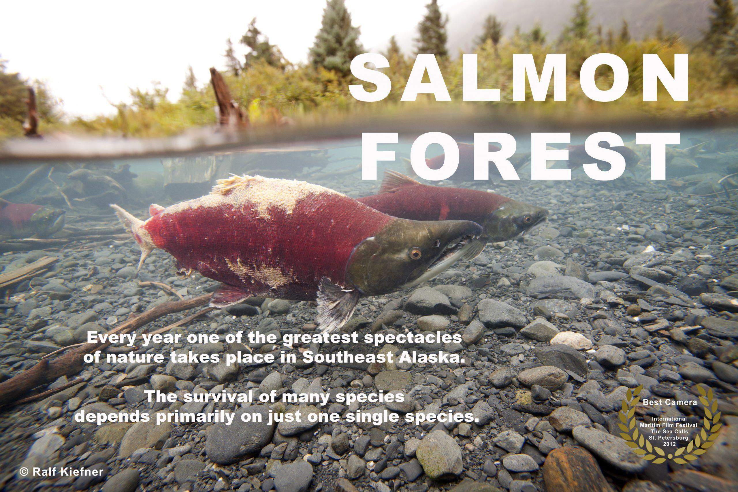 Salmon Forest - Ralf Kiefner
