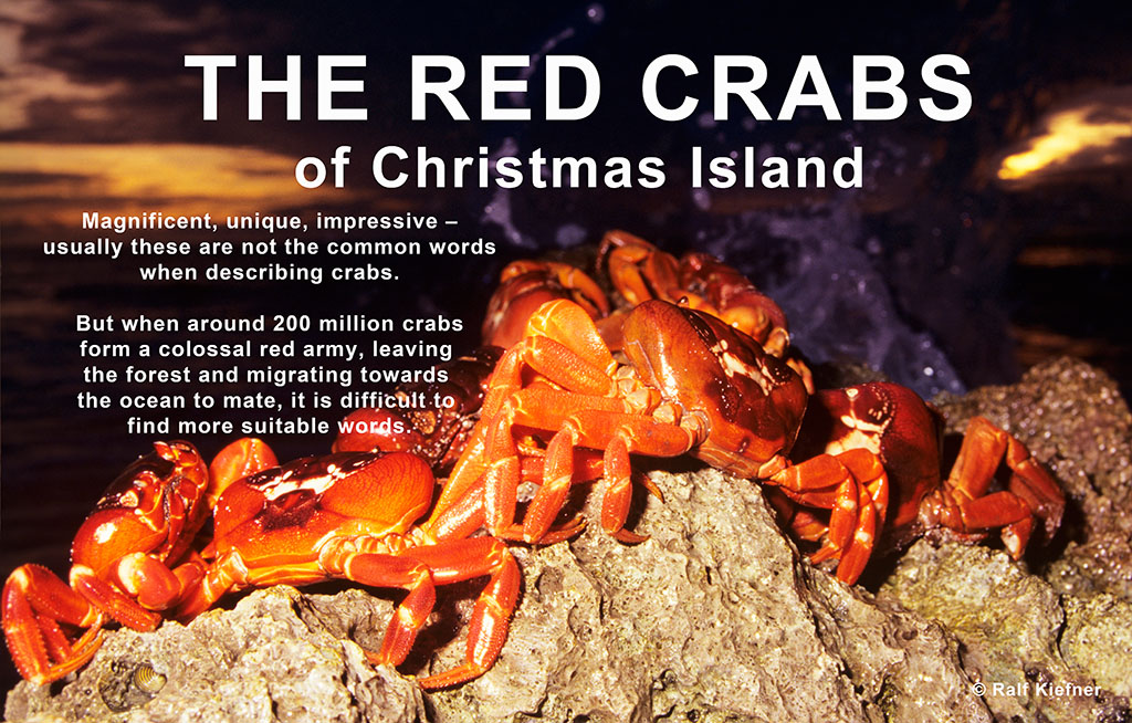 Red Crabs - Ralf Kiefner