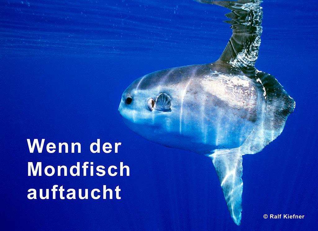 2000 - Mondfisch - VOX - Ralf Kiefner
