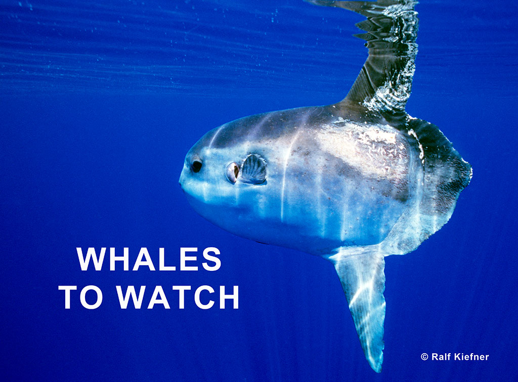 Whales to watch