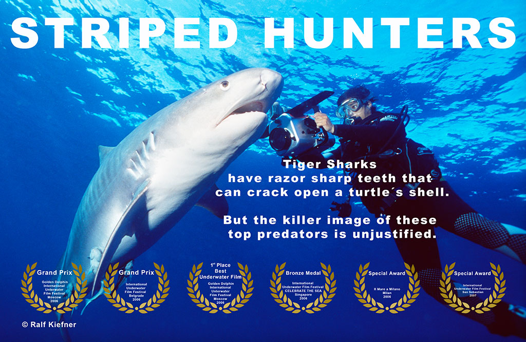Striped Hunters - Tigersharks