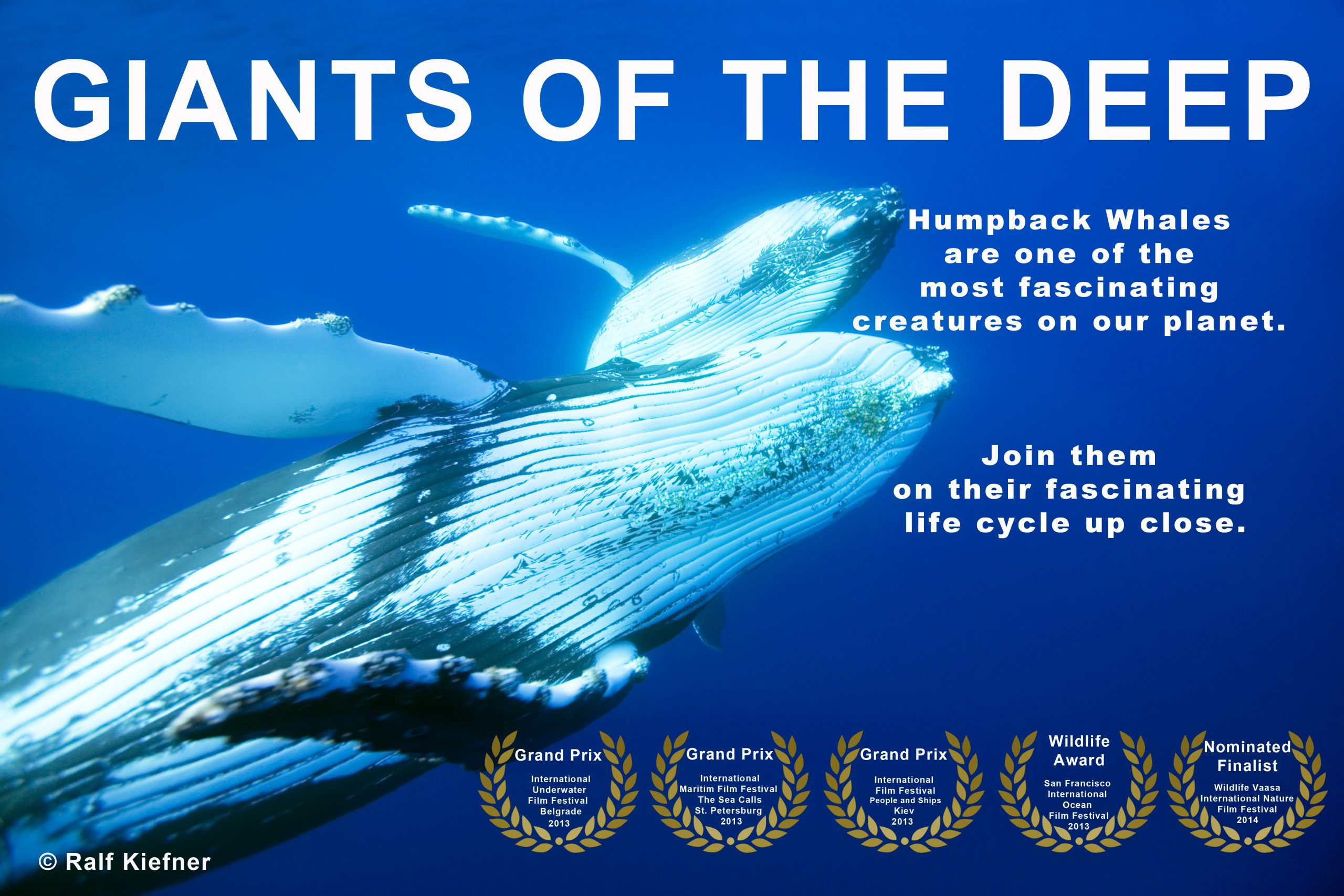 Giants of the deep - Humpback Whales