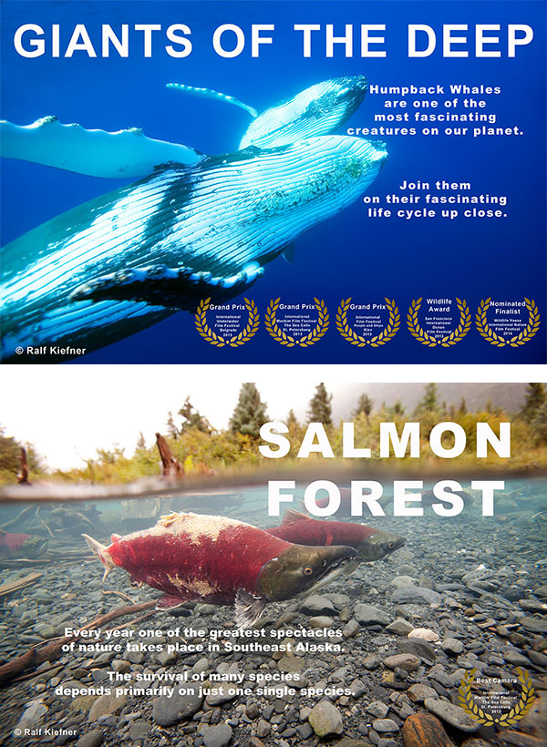 Giants of the deep - Salmon Forest